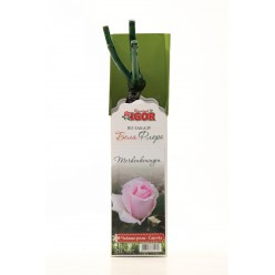 Роза Мёрхенкёнигин чайно-гибр.  (саж. ЗКС)  коробка Сербия