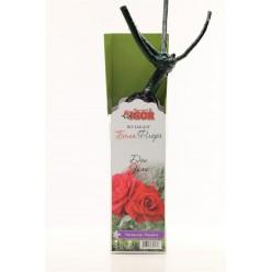 Роза Дон Жуан плетистая (саж. ЗКС)  коробка