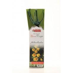Роза Голден Мейландина миниатюрная (саж. ЗКС)  коробка