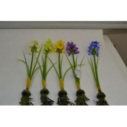 Цветок искусственный Фрезия с корнем №35.05