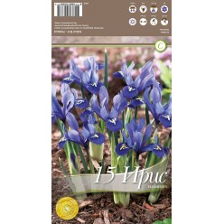 Ирис Reticulata Harmony 15 шт/уп р.5/+, каперс 108402