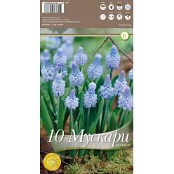 Мускари Azureum 10 шт/уп р.5/+, каперс 108403