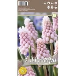 Мускари Pink Sunrise 5 шт/уп р.5/+, каперс 108229