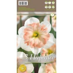 Нарцисс Pink Wonder 3 шт/уп р.14/16, каперс 108315