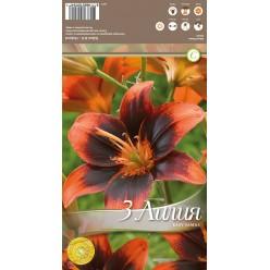 Лилия Easy Samba 3шт/уп. р. 12-14 каперс 308411