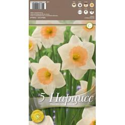 Нарцисс Peaches and Cream 5 шт/уп р.14/16, каперс 108430