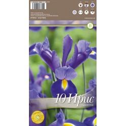 Ирис Valentine 10 шт/уп р.7/+, каперс 308449