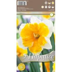 Нарцисс Orangery 5 шт/уп р.14/16, каперс 108159