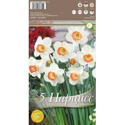 Нарцисс Pink Charm 5 шт/уп р.14/16, каперс 108166
