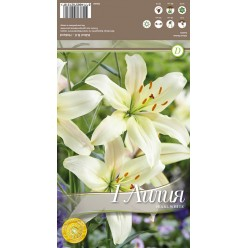 Лилия Pearl white 3шт/уп р.12-14 каперс 308481