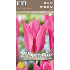 Тюльпан Jazz 8 шт/уп р.11/12, каперс 108050