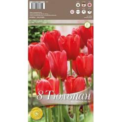 Тюльпан Sky High Scarlet 8 шт/уп р.11/12, каперс 108104