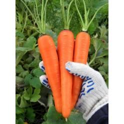 Морковь Долянка 10г.(семена)