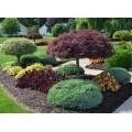 Удобрения для декоративных кустарников и деревьев