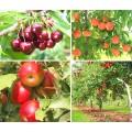 Удобрения для фруктовых деревьев и кустарников
