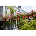 Удобрения для балконных цветов