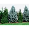 Удобрения для хвойных деревьев и растений