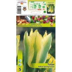 Тюльпан Yellow Spring Green 5шт р.11/12 луковица 12180