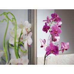 Опора пластмассовая для Орхидей кремовая 39см 0309PS Т08