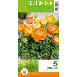 Ранункулюс Orange 5шт/уп  р.6-7 клубень