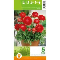 Ранункулюс Red  5шт/уп р.6-7 клубень