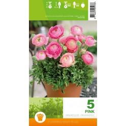 Ранункулюс Pink 5шт/уп  р.6-7 клубень