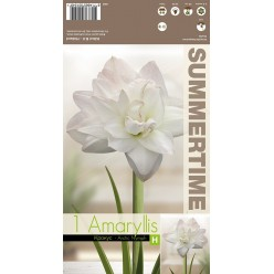Амариллис Arctic Nymph р.24-26  1шт/уп  луковица