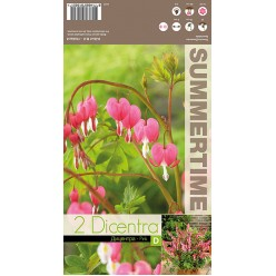 Дицентра spectabelis Pink  р.2/3  2шт/уп  клубень
