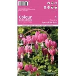 Дицентра spectabelis Pink  р.2/3  1шт/уп  клубень