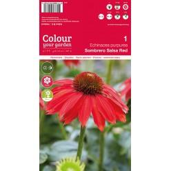 Эхинацея purpurea Sombrero Salsa Red р.I  1шт/уп  клубень
