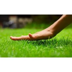 Семена травы Газонная смесь 1кг