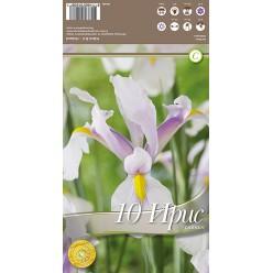 Ирис Hollandica Carmen  р.6-7  10 шт/уп клубень