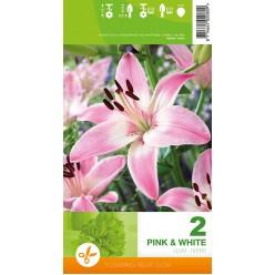 Лилия Pink and White р.12-14  2шт/уп луковица