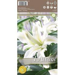 Лилия Polar Star р.14-16 1 шт/уп луковица