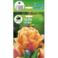 Тюльпан Фримен махровый (луковица, 5 шт/упак)