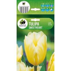 Тюльпан Свит Хат гибрид Фостера (луковица, 4 шт/упак)