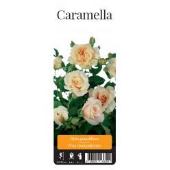 "Роза Карамель парк. гранд. (саж. ЗКС) ""Monteаgro"" коробка 6.16"