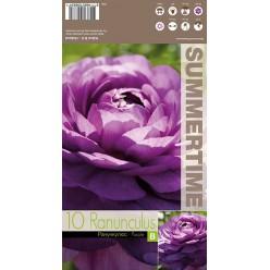 Ранункулюс Purple 10 шт/уп р.6-7, каперс