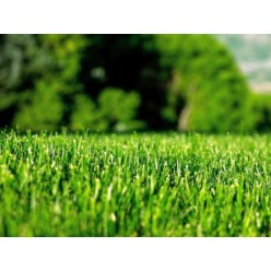 Семена травы газонной Универсал 10 кг