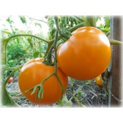 Помидоры Оранж-1 20шт