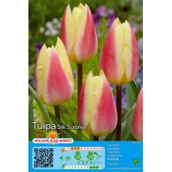 Тюльпан Silk Surprise 5шт р.10/11 луковица 37067