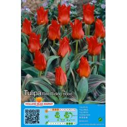Тюльпан Red Riding Hood 5шт р.11/12 луковица 12045