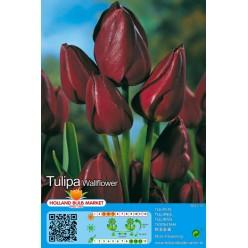 Тюльпан Wallflower 5шт р.11/12 луковица 12115