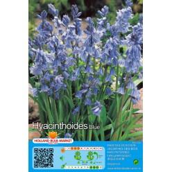 Сцилла Hispanica Blue  8 шт р.7/8 луковица 12425