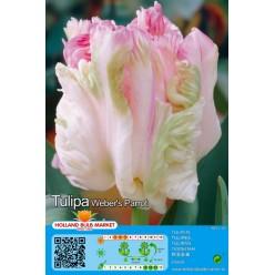 Тюльпан Weber's Parrot 5шт р.11/12 луковица 75107